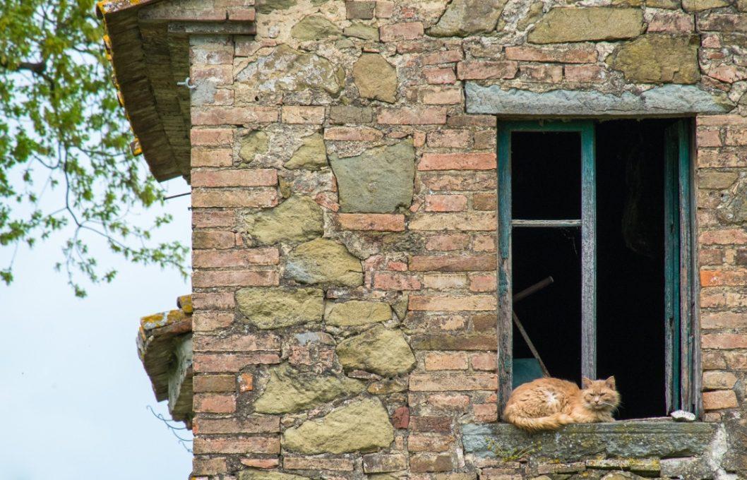 """Het huis van """"oma tandje"""" - nu woont alleen de poes er nog"""